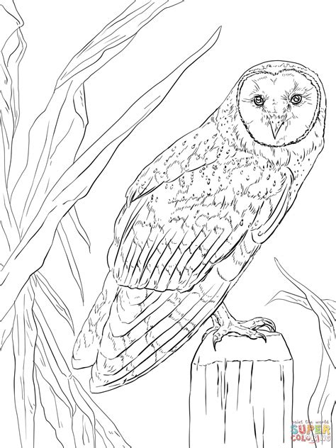barn owl coloring page free printable coloring pages