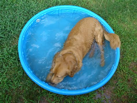 Planschbecken Kunststoff Hund by Plastic Wading Pool Amazing Swimming Pool