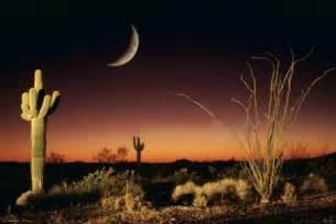 Desert Wall Murals desert silhouette arizona landscape poster buy online