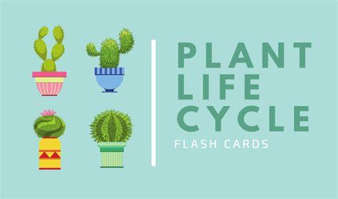 flash card maker bbc crea flashcard personalizzate online gratis canva