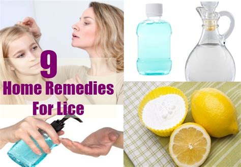 best effective home remedies for lice remedies