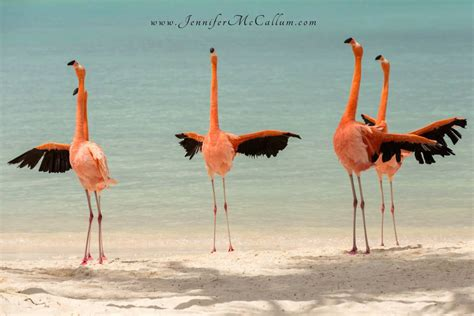 on the beach flamingos on the beach aruba renaissance