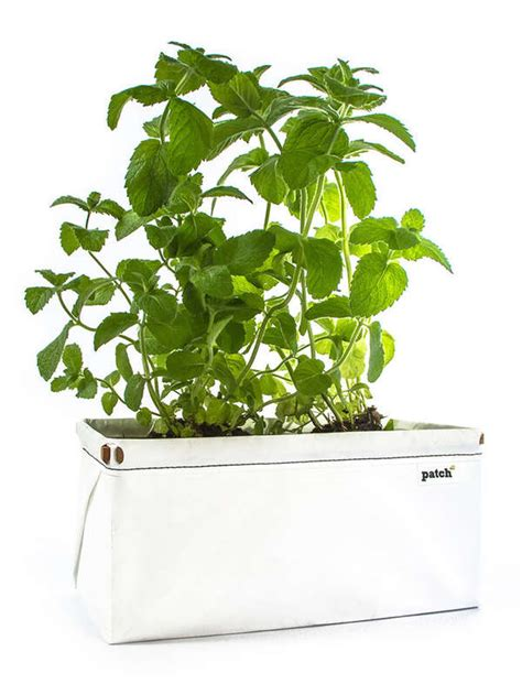 affordable self watering planter lets you grow a countertop garden self watering eco planters let s patch