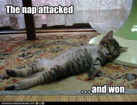 Sleepy Kitty Meme - nap attack cat kitten meme funny pinterest cats