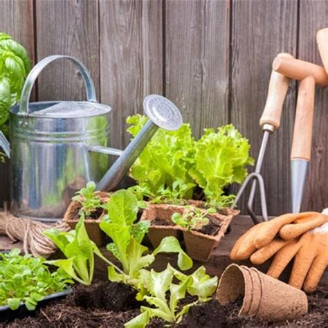 best way to keep bugs away from patio 5 tips to keep the bugs away when gardening from the