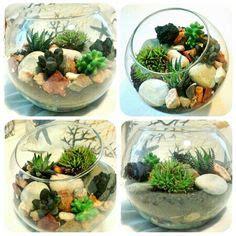 piante grasse in vasi di vetro oltre 1000 idee su piante in vaso su piante