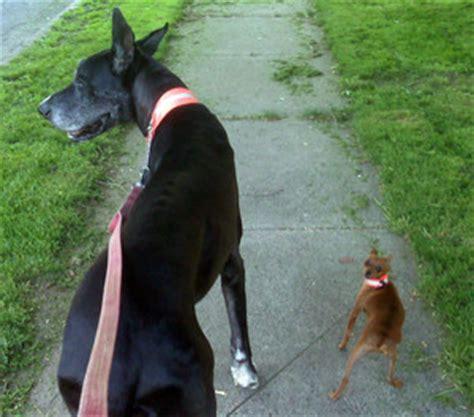 pulling on leash leash