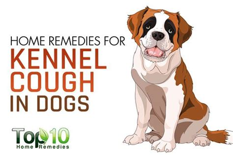 home remedies for kennel cough in dogs page 2 of 3 top
