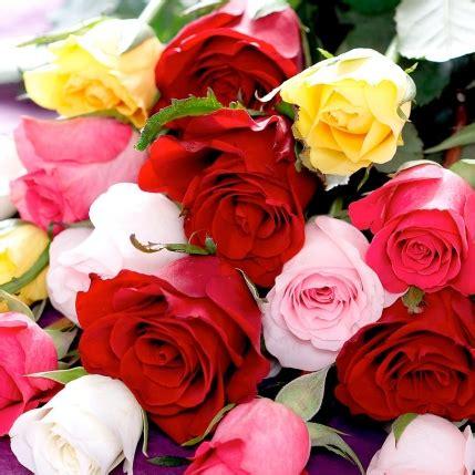 imagenes de rosas diferentes colores ramo rosas de colores