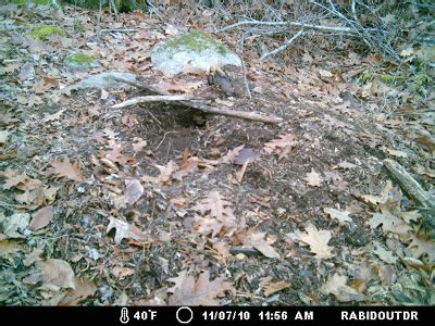 Dirt Mountain Mystery the maine outdoorsman another mystery animal