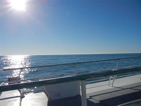 galveston party boat rental galveston party boats tx top tips before you go with