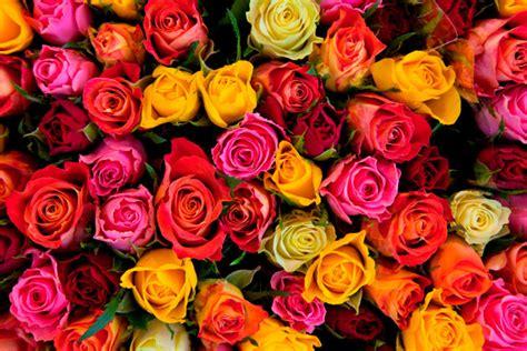 Flowers Poughkeepsie - community activist john flowers dies at 71