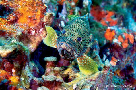 Best Of Texas 2014 Photographers Choice Tpw Magazine Flower Garden Reef