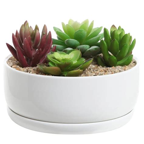 cactus planter 12 chic ways to decorate with succulents how does she