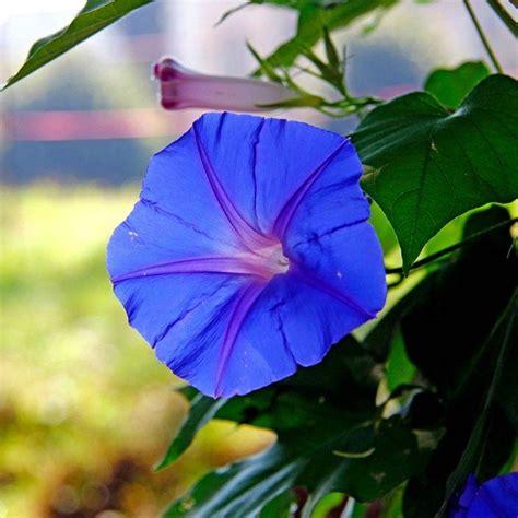 fiori di agosto in edicola dal 23 agosto casa in fiore di settembre cose