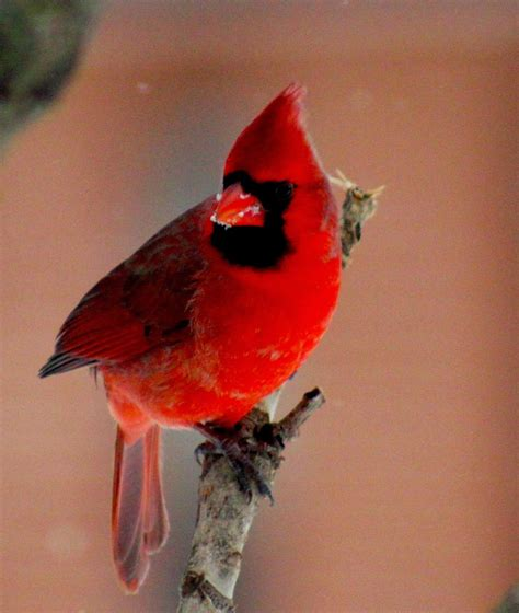 don t forget to feed birds in winter the winter sweet