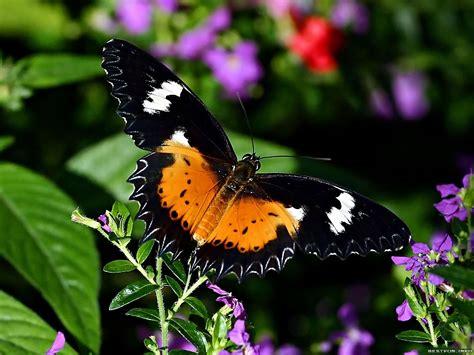 imagenes de wasap de flores fondo de pantalla mariposa flores violetas hd