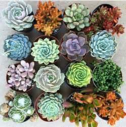 Geode Home Decor best 25 succulents ideas on pinterest succulents garden