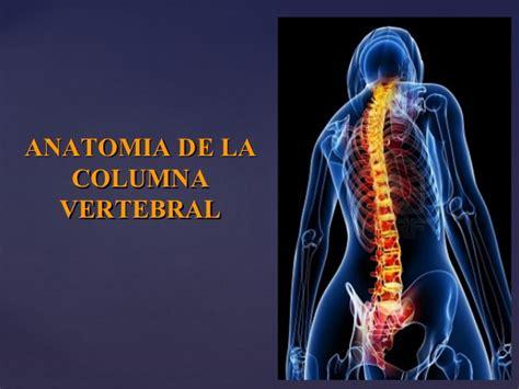 libro la columna de la columna vertebral basico