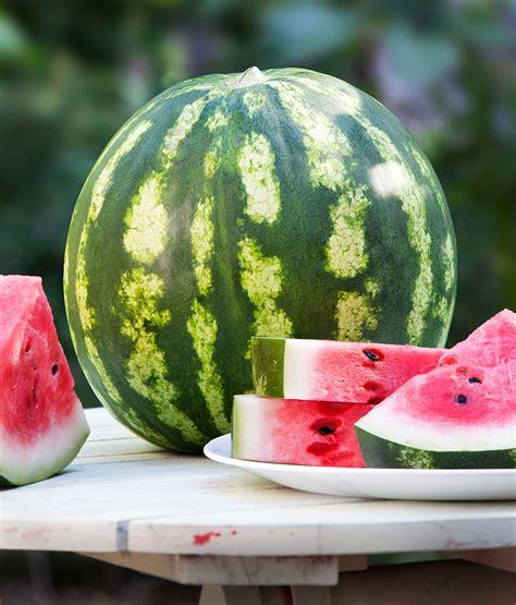 Urban Organic Gardening - crimson sweet watermelon bonnie plants