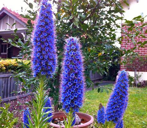 Flowers In Australian Gardens 25 Best Ideas About Australian Garden On Australian Garden Australian