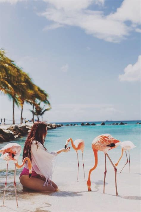 flamingo wallpaper sydney best 25 flamingo resort ideas on pinterest aruba