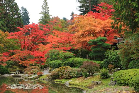 Japan Botanical Garden Fall In With The Japanese Botanical Garden The Whole U