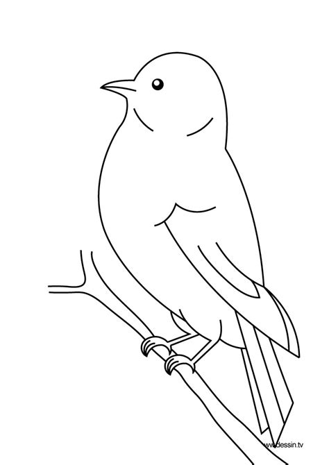 bird coloring pages coloring bird