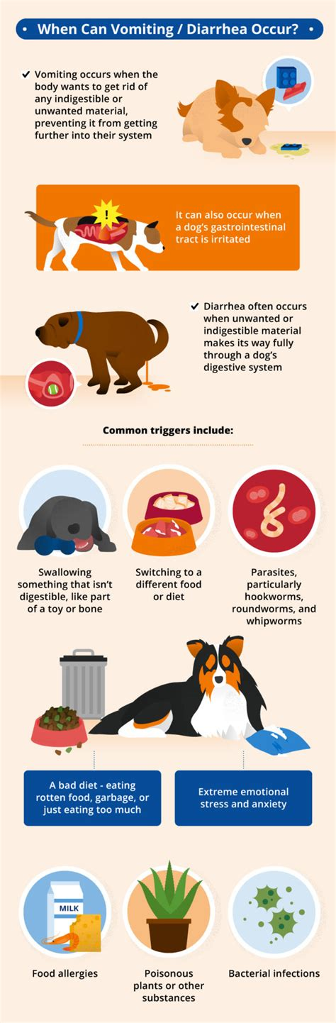 what causes puppies to diarrhea foods that give you diarrhea foodfash co