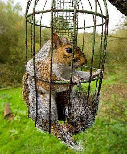 squirrel feeder squirrel sciuridae