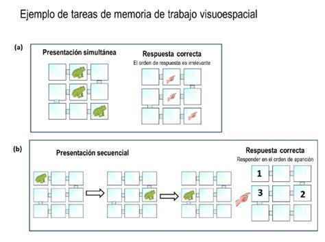 ciencias traviesas bilingual children have better working memory than