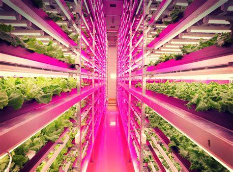 In the pink: Speeding up crop growth FutureFood 2050