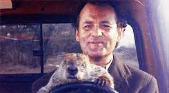 bill murray groundhog day xavier seeing by brown