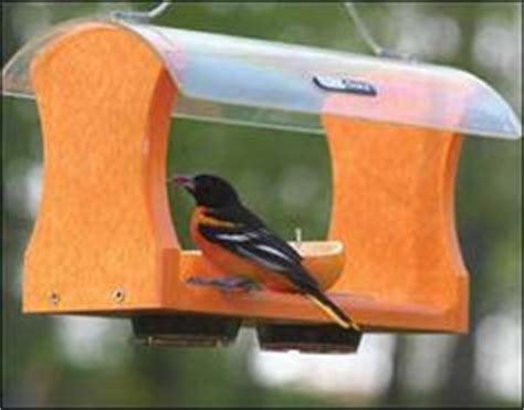 1000 images about orioles on pinterest baltimore