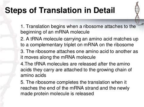 8 protein synthesis steps demo presentation protein synthesis xander jon siose