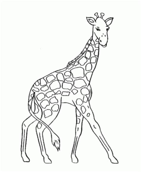 coloring pages dancing animals jirafas para colorear
