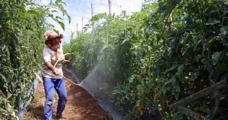 Pembersih Buah Dan Sayur Dari Bahaya Pestisida yuki berbagi sehat bahaya pestisida pada buah dan sayur