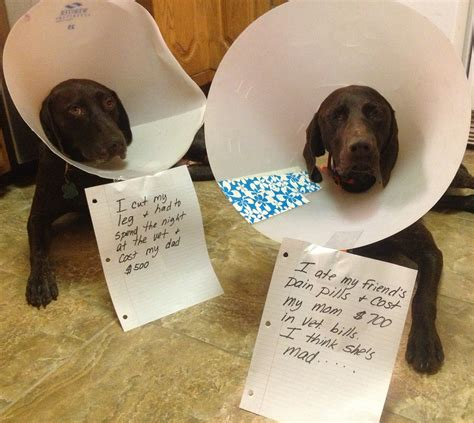 cone for dogs quotes by helen gray cone like success