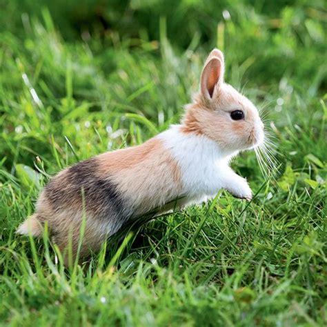 le lapin maxi zoo