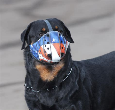 how to your rottweiler to attack on command rottweiler dogs attacks images