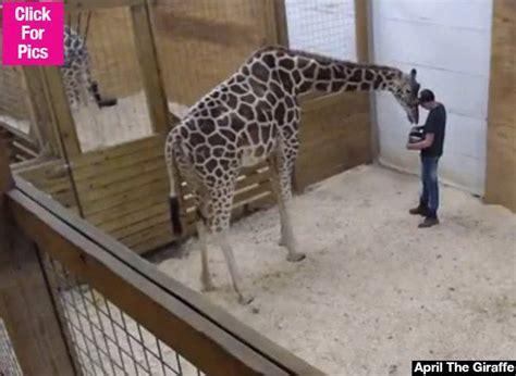 Giraffe Spider Meme - best 25 giraffe meme ideas on pinterest pictures of