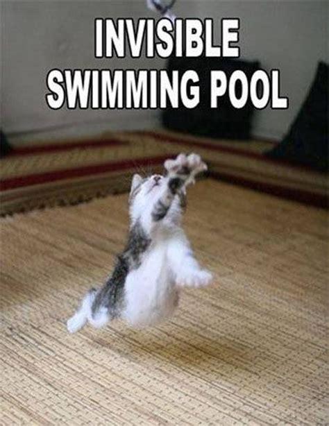 Invisible Cat Memes - invisible cat meme the trupanion blog