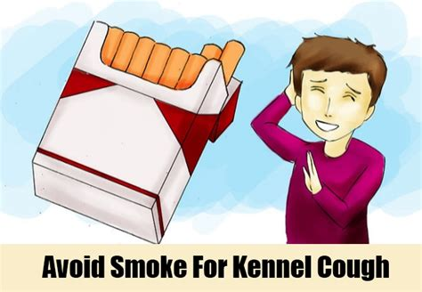 Home Remedies For Kennel Cough by 15 Effective Home Remedies For Kennel Cough