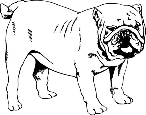 coloring pages of bulldog puppies english bulldog coloring pages