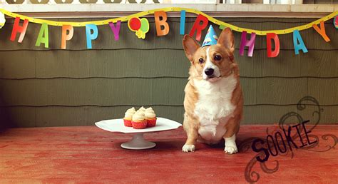 Corgi Birthday Meme - corgi birthday card corgi birthday card cards corgi corgi