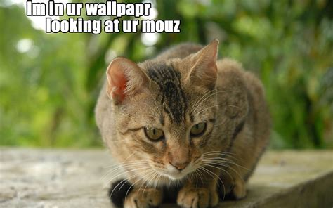 Wallpaper Lol Cat | download cats lolcat wallpaper 1440x900 wallpoper 260977