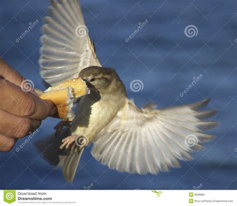 bread bird royalty free stock photo image 8009965