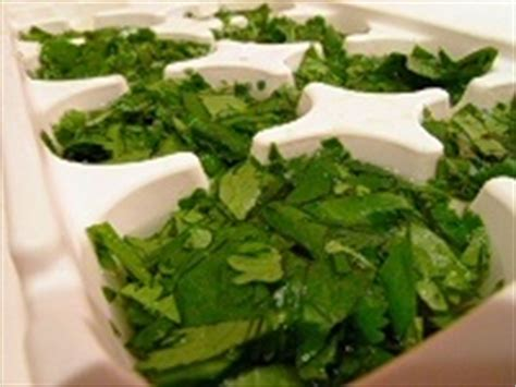 how to freeze cilantro the blork blog