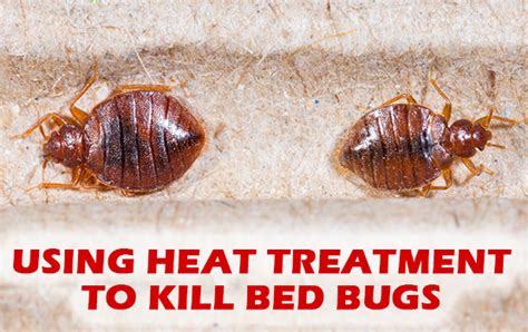 kill bed bugs with heat bed bug elimination pestpro