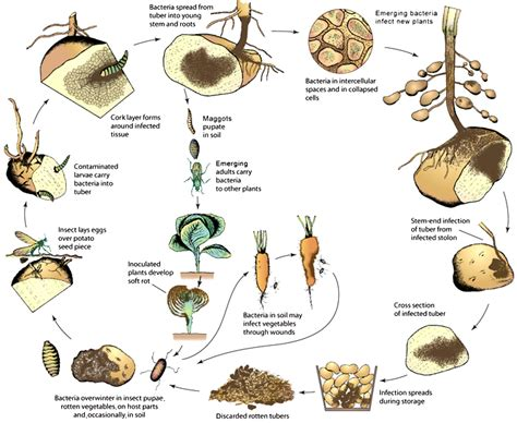 list of plant diseases caused by bacteria underexplored niches in research on plant pathogenic bacteria